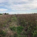 Predané: Pozemok pre výstavbu RD, Čunovo, Dolné kostolné polia, 1000m2-5