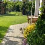 Predané: Predaj Rodinný dom v Šoporni, v tichej lokalite, pozemok 674m2, úžitková plocha 181m2,záhrada, kôlňa-11