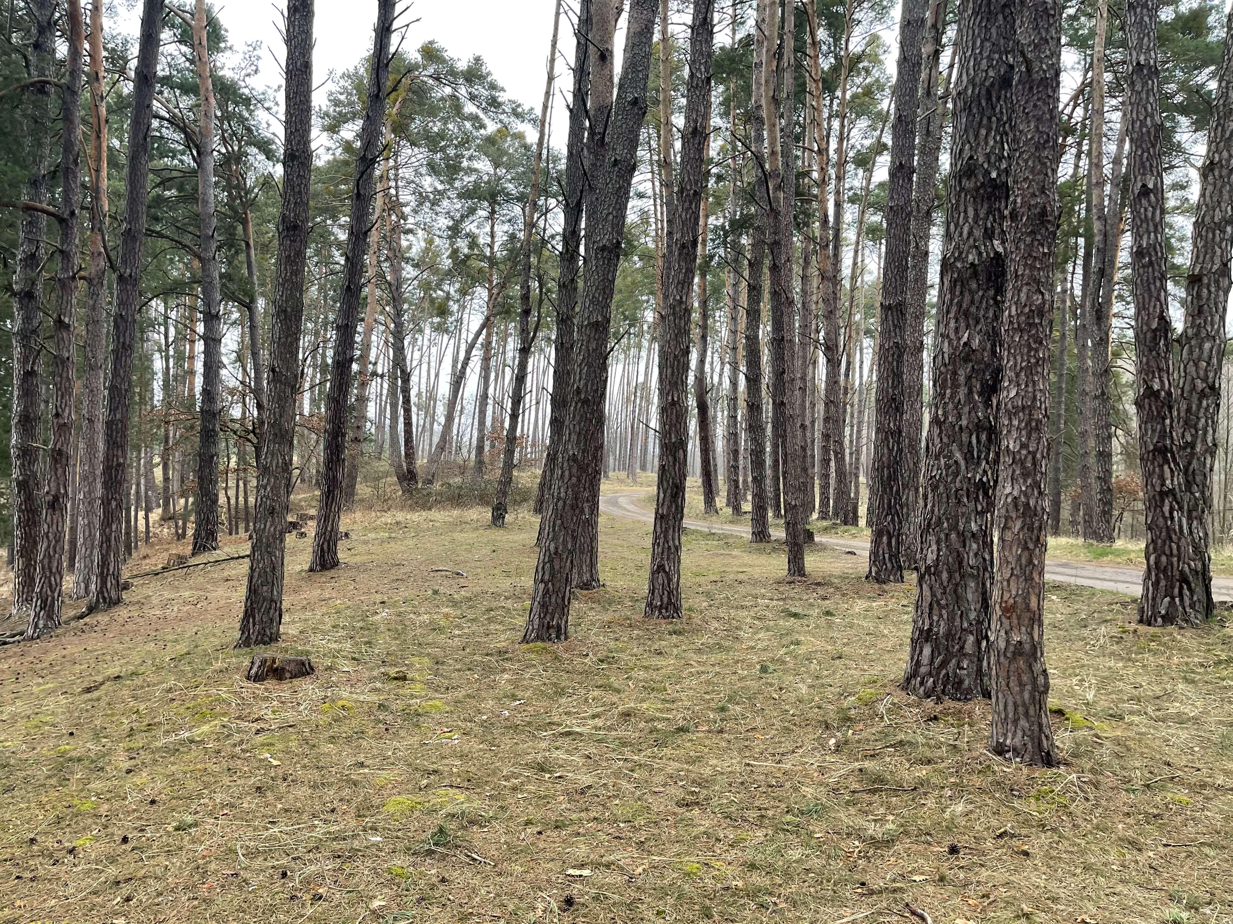 Predané: Rybník, orná pôda, trvalé trávnaté porasty spolu 9541,9 m2, Tančiboky, pri Studienke, za Malackami-3