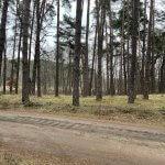 Predané: Rybník, orná pôda, trvalé trávnaté porasty spolu 9541,9 m2, Tančiboky, pri Studienke, za Malackami-4